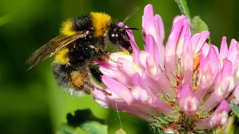 Как привлечь пчел в ваш сад